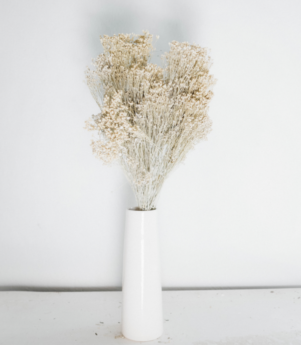 Broom Bloom Blanc